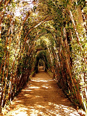 Boboli Gardens (300Wx400H) - Walk through the Boboli Gardens