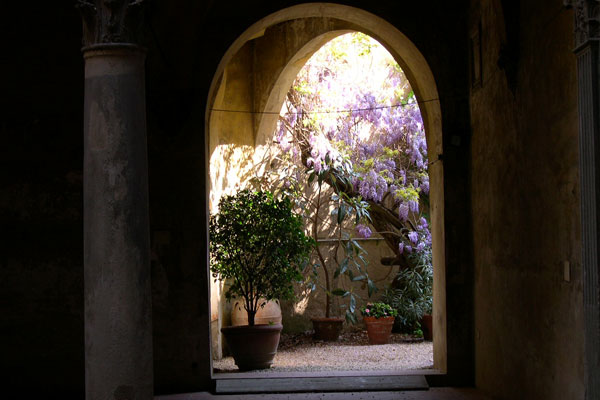 Glicine (600Wx400H) - Glicine (Wistaria) in an interior garden in the Santa Croce district...(Photo by Marco De La Pierre)