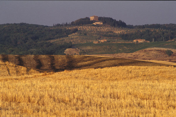 Golden Tuscany (600Wx400H) - Golden Tuscany (Photo Courtesy of <a href='http://www.studentsville.it' target='_blank'>studentsVille.it</a>)
